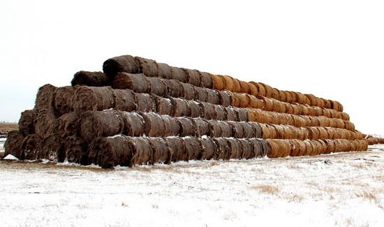 сельхоз-опытная_03