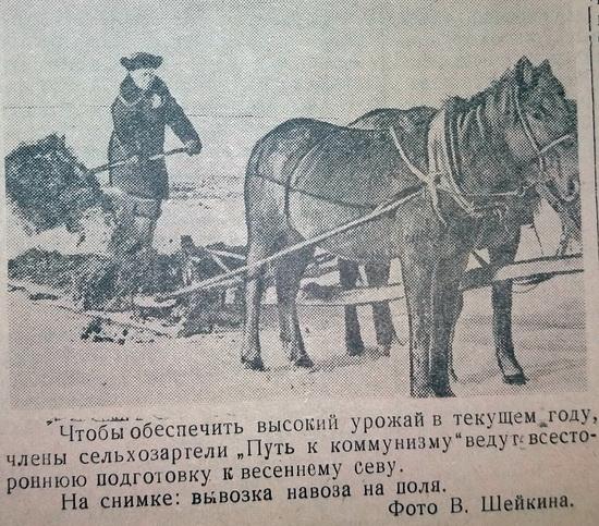 колос-1958_5