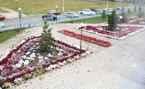цветы-больница_1
