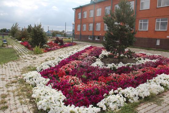 цветы-больница_4