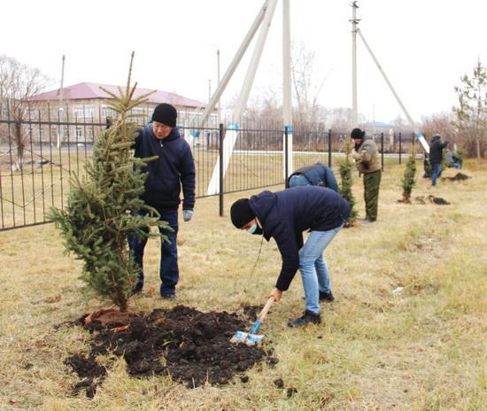 аким-деревья1