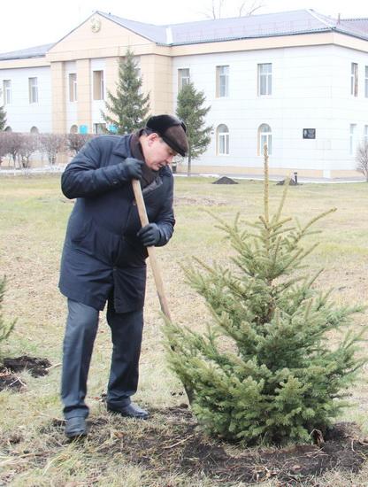 аким-деревья2